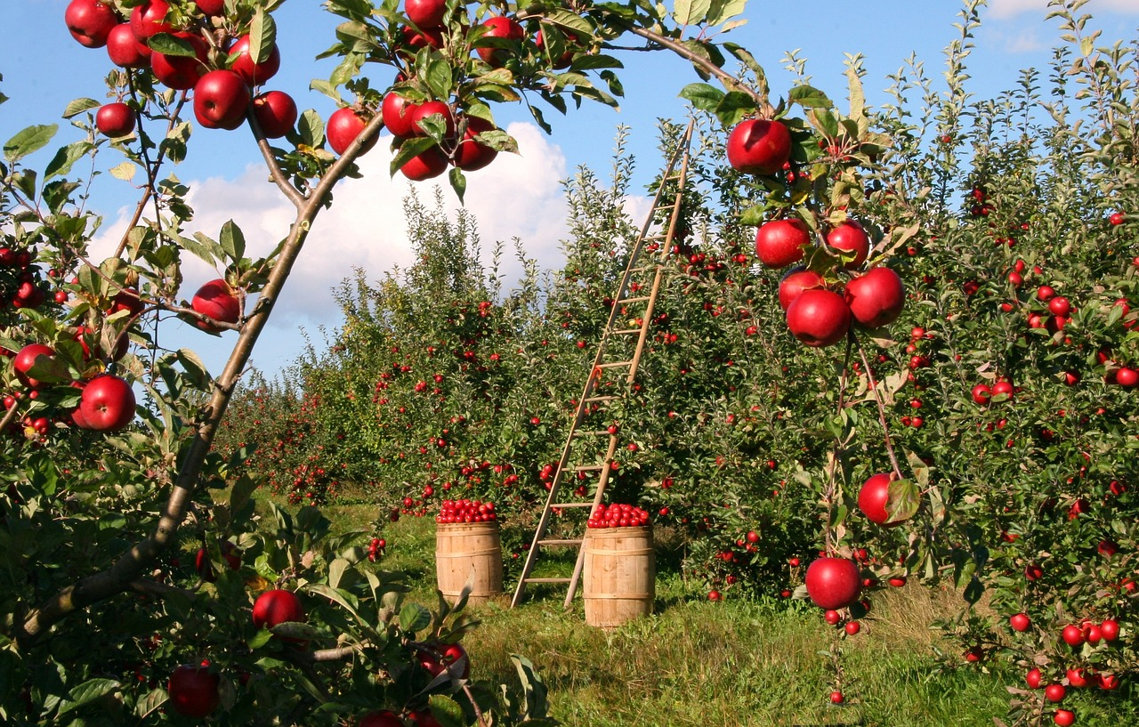 農業のアルバイトの苦労と知識を得て思う事