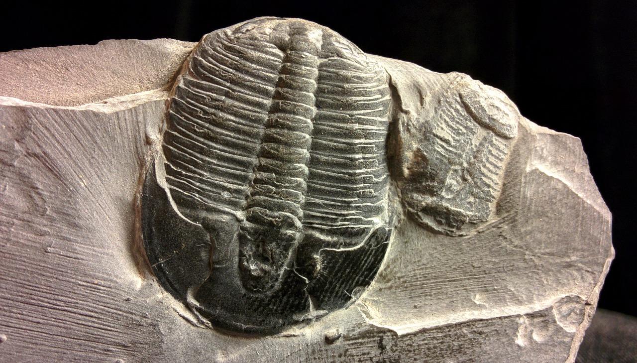 趣味におすすめ素敵な化石の世界