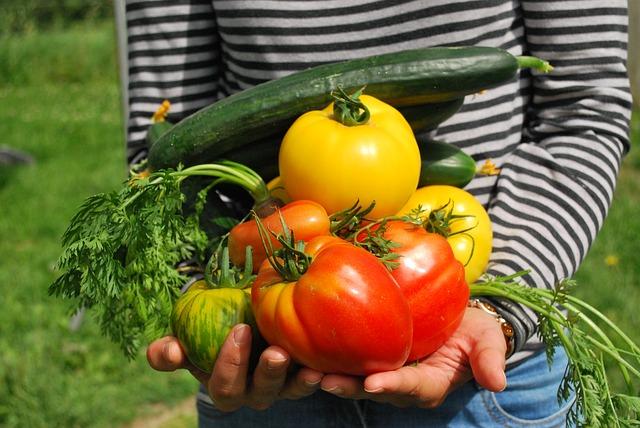 趣味と実益をかねて家庭菜園の野菜作り!